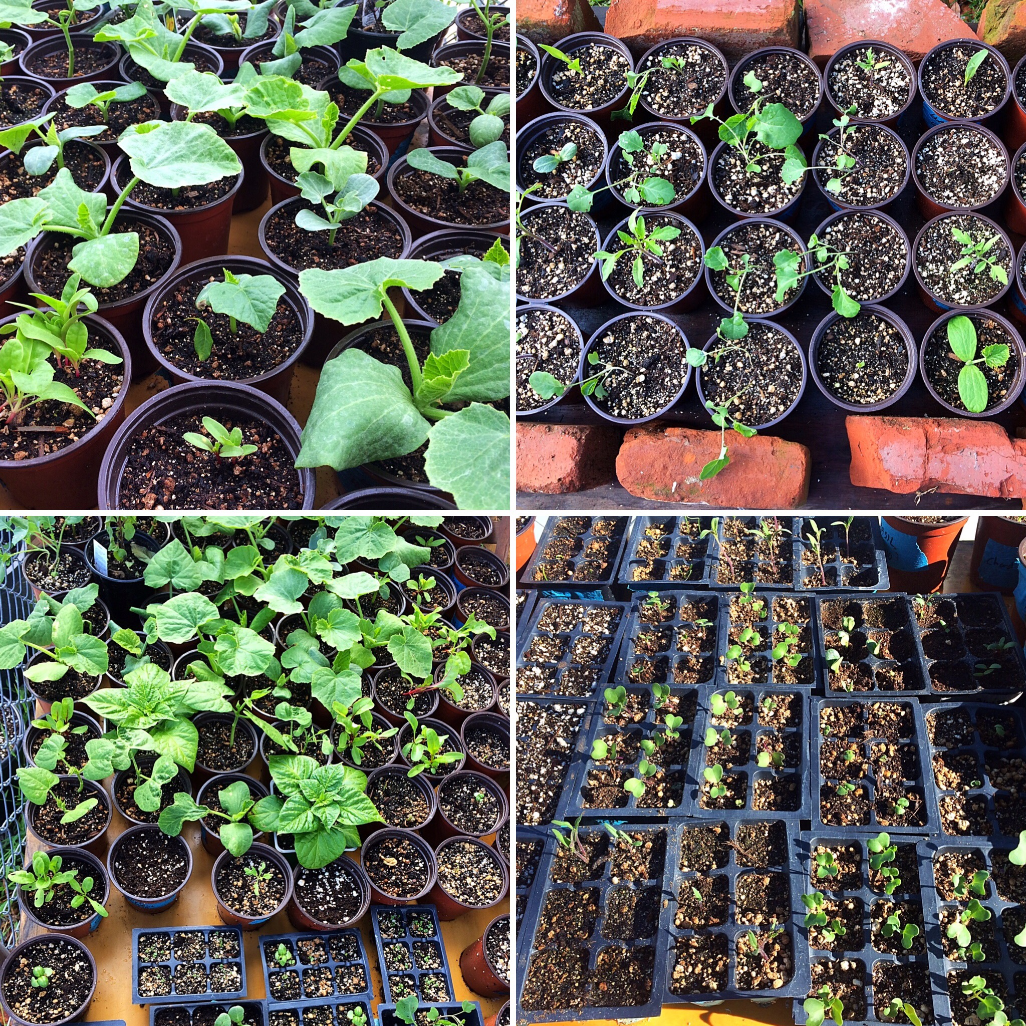 Availability List & Pricing for Potted Plant Sale